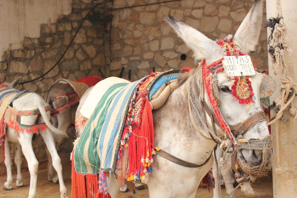 burros-taxi-mijas